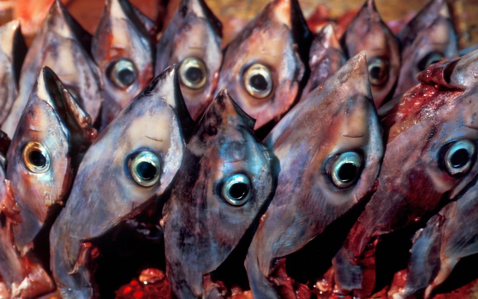 Weird Food - Scary Food 4 Tuna Eyeballs