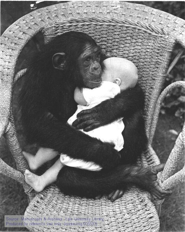 Ape Animal Hugs