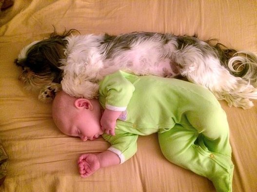 Blanket Dog Dog and Baby