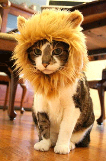 Cat Hat Crazy Gift Ideas