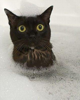 Cat Shocks