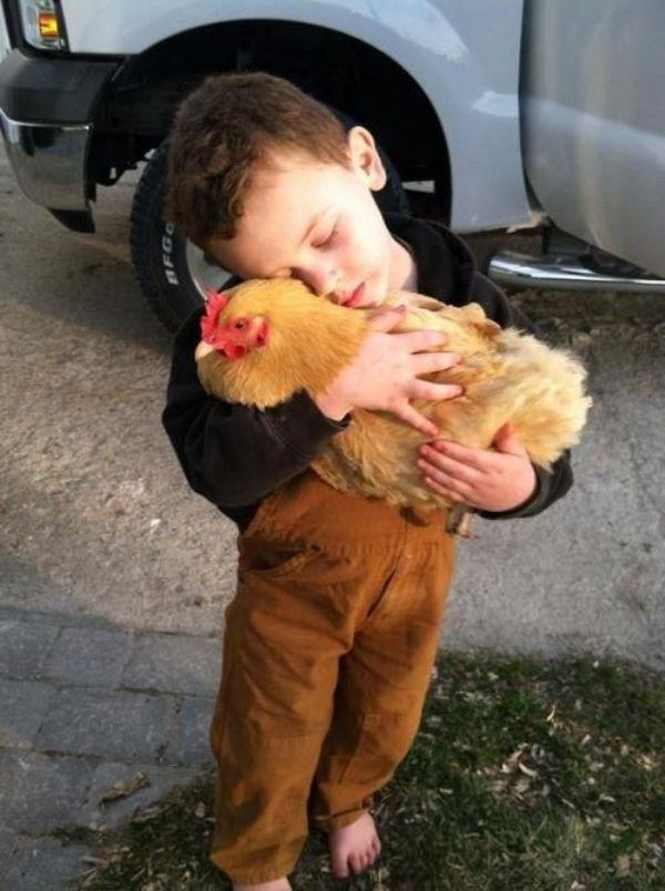Chicken Animal Hugs