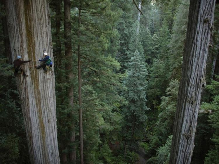 Climbing Redwoods High Place