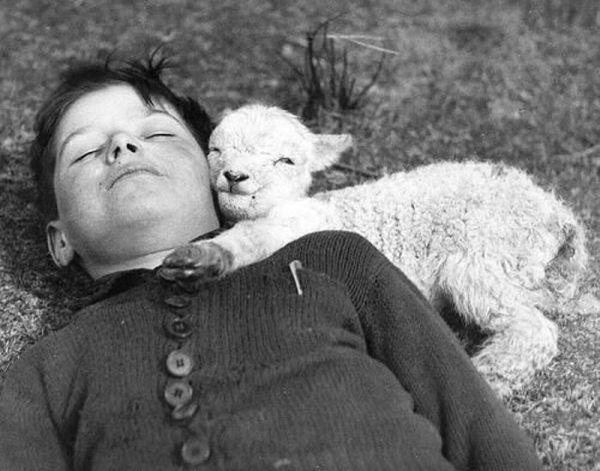Cute little lamb Animal Hugs
