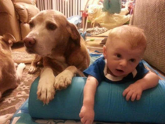 Cuteness Unbound Dog and Baby