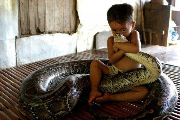 Dangerous snake Animal Hugs