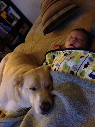 Dog Babysitting Dogs and Babies