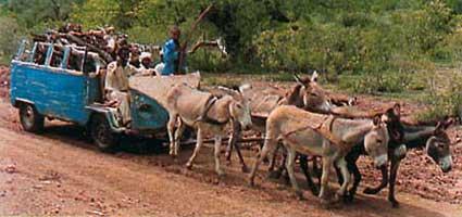 Horse Power Car 12 - Donkey Carriage