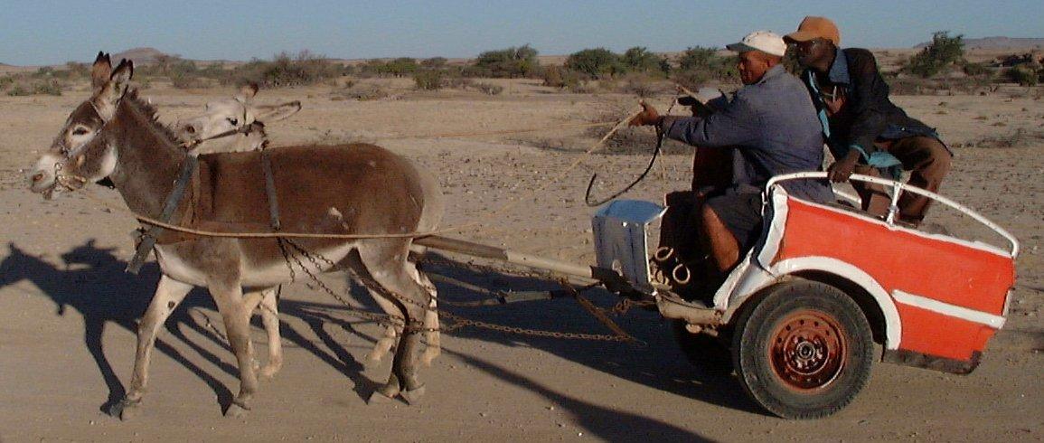 Horse Power Car 13 - Donkey Truck Half Car
