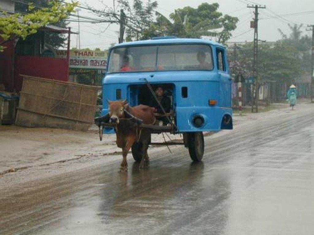 Horse Powered Car 15 - Cow Truck