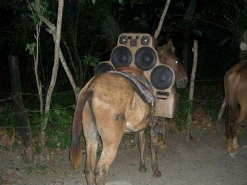 Horse Power Car 17 - Horse with Stereo Speakers