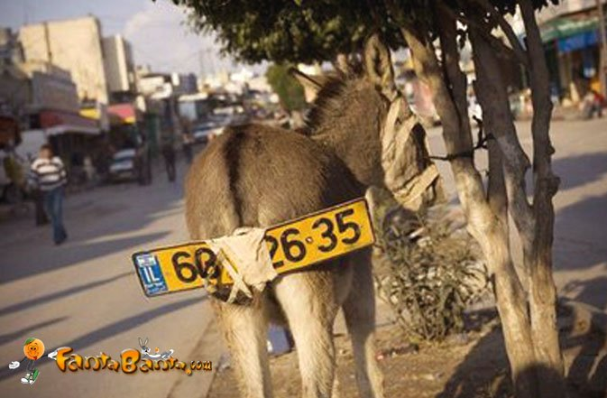 Horse Powered Car 18 - Donkey License