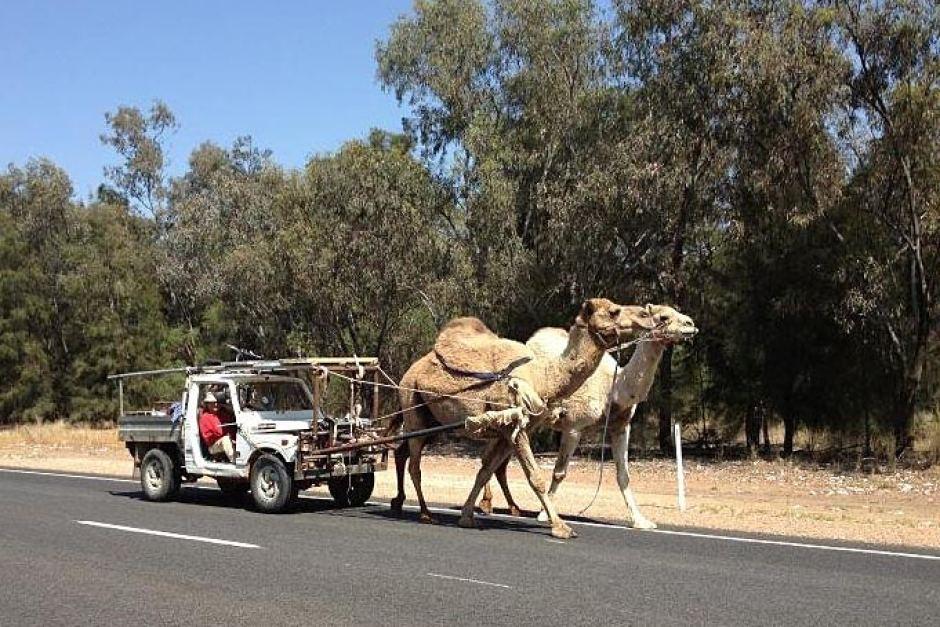Horse Power Car 19 - Camel Power Car