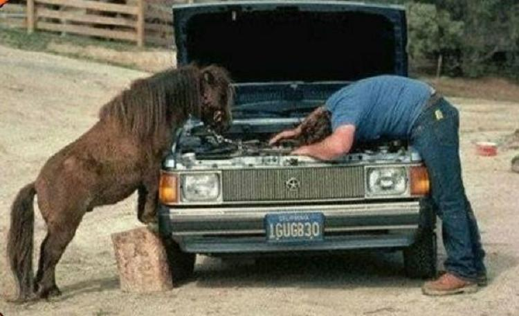 Horse Power Car 20 - Horse Help