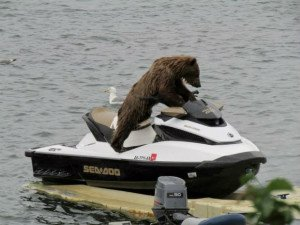 Jet skiing is my favorite hobby. Bears like human
