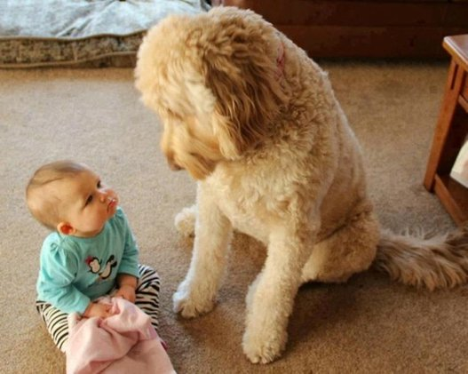 Oath To Carry Friendship Dogs and Babies