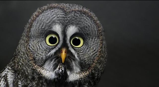 Owl 2 Shock