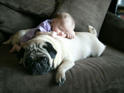 Pillow Super Hero For Babies Dog and Baby