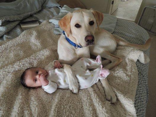 Protective Dog Dog and Baby