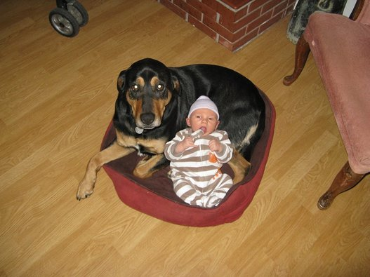 Side by Side Dogs and Babies