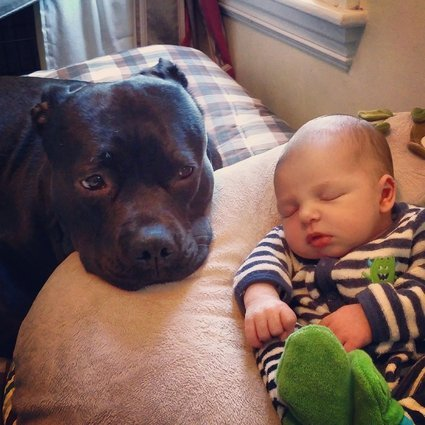Sleep Time Guarding Dog and Baby