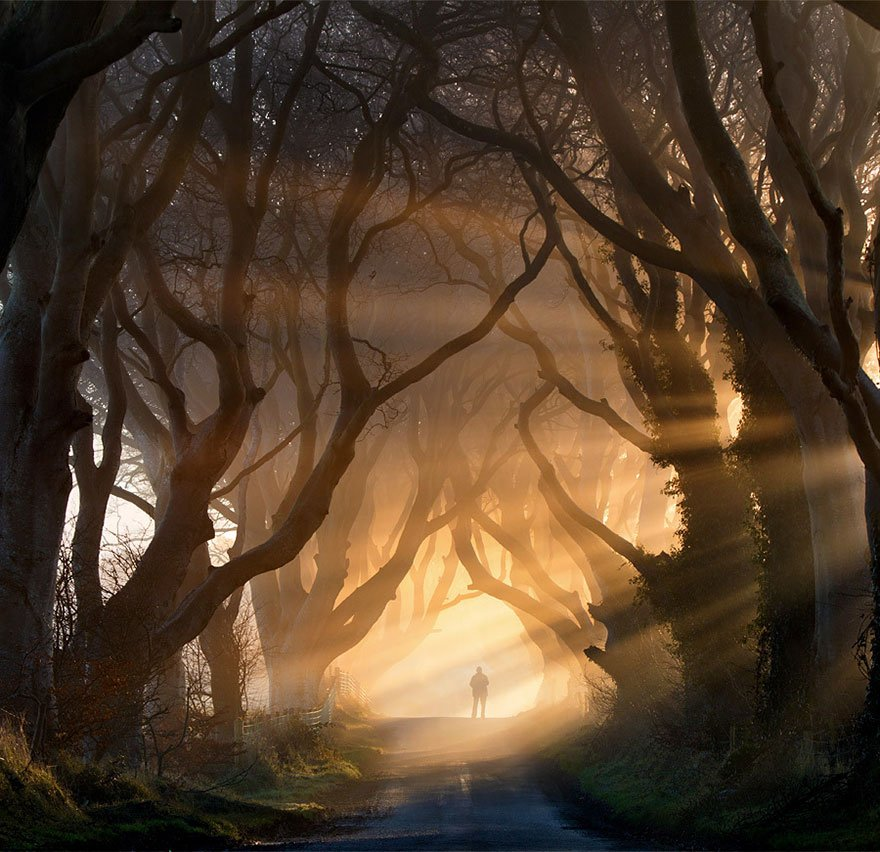 The Dark Hedges In Northern Ireland beautiful tree