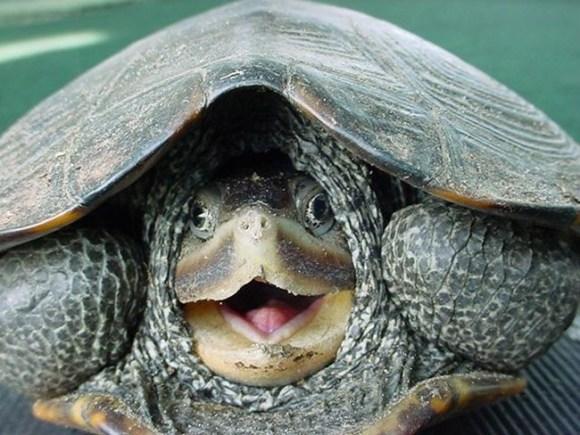 Turtle Shock