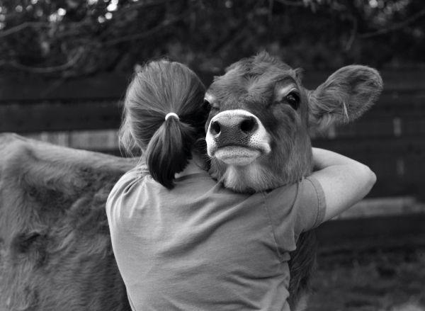 Who Doesn't Love to hug Animal Hugs