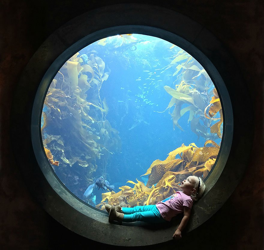 A Girl Stares In Wonder At An Aquarium Tank, Monterey Bay Aquarium, Monterey, California Photo Contest