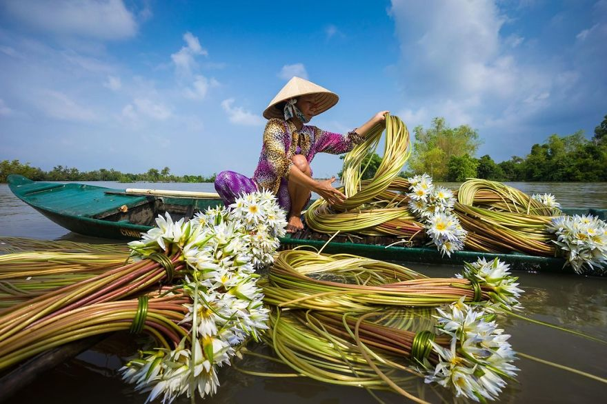 A Woman Collects Water Lilies, Chau Doc, Mekong Delta, Vietnam Photo Contest