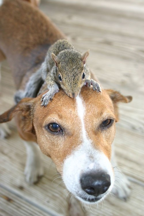 Animals Riding Animals 11 - Squirel on Dog