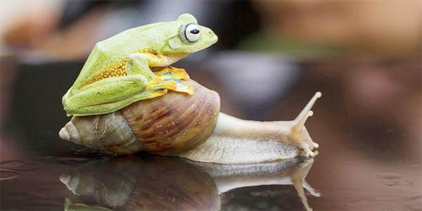 Animals Riding Animals 7 - Frog Riding Snail