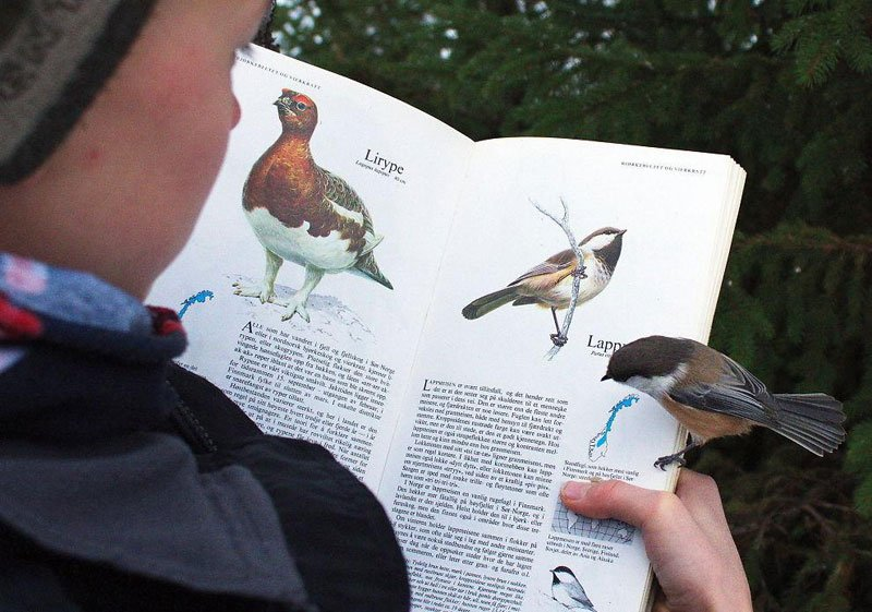 Bird reading about Birds Great Photos