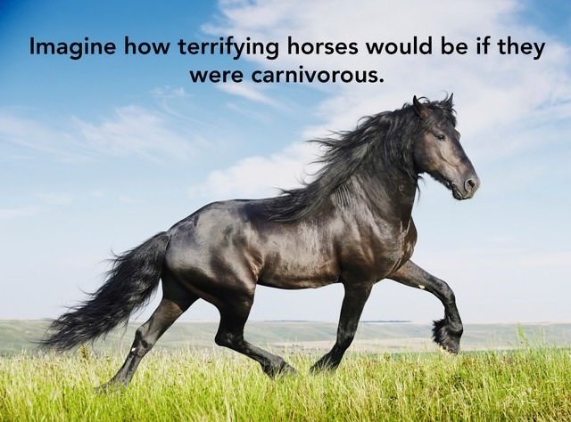 Carnivorous Horses Smart Idea