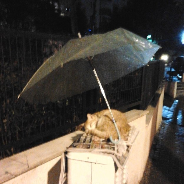 Cat saved from rain Bad Places