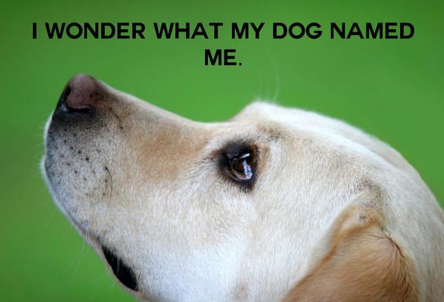 Dog Named Me Smart Idea
