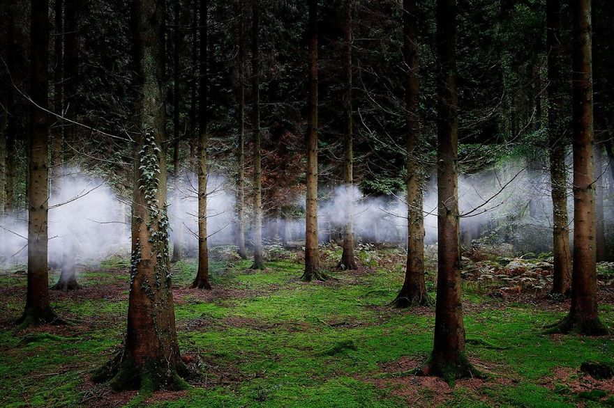 Fog Weaves Through Forest Trees, New Forest, Hampshire, United Kingdom Photo Contest