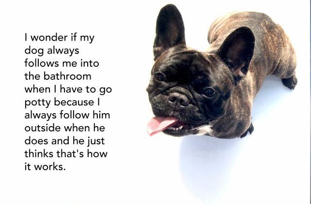 Following Dog Smart Idea