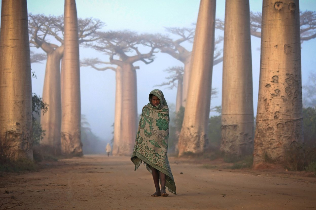 Malagasy girl walks among the Baobab trees Human Diversity