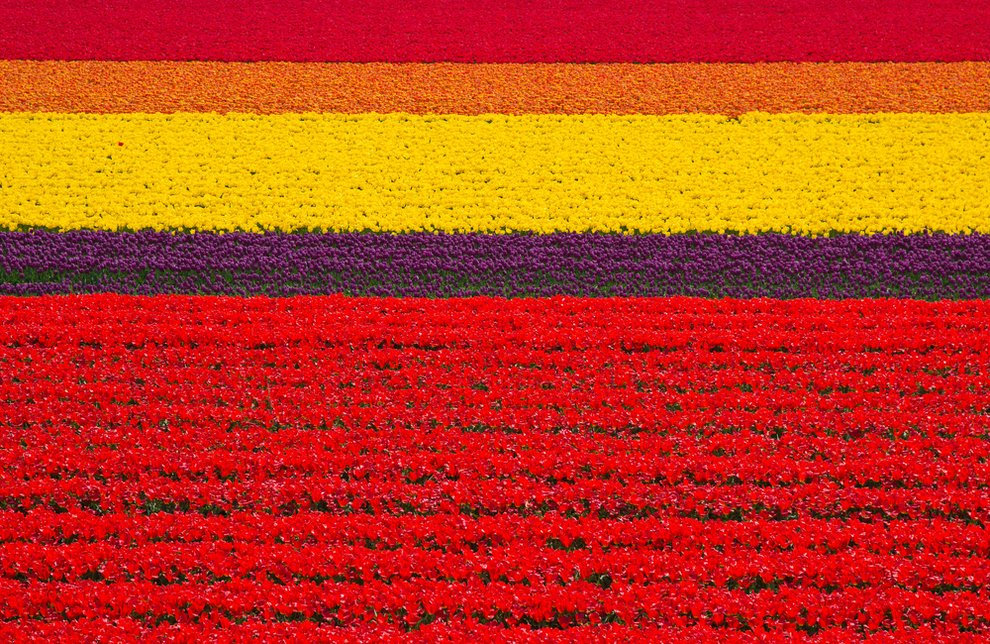 Tulip fields in the Netherlands Unusual Places
