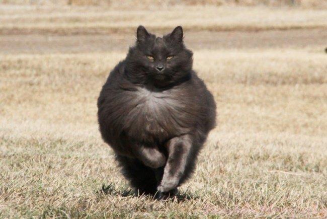 Alien Cat Popular photograph