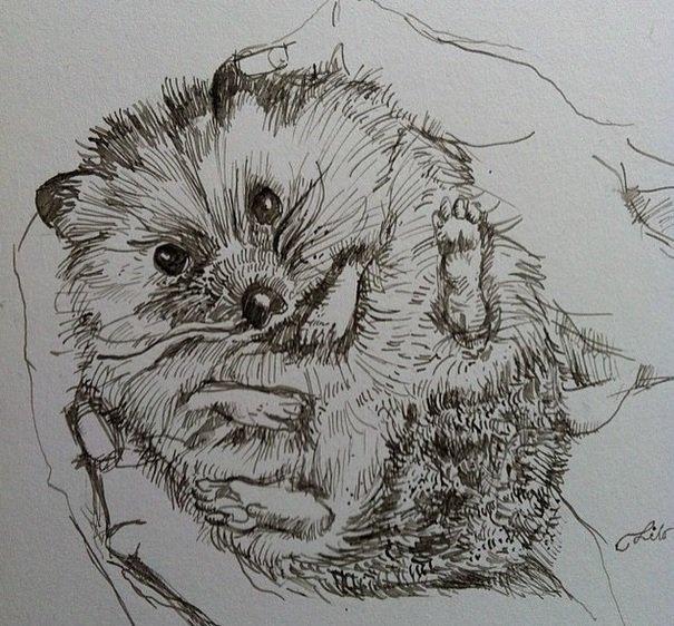 Amazing Sketch Hedgehog