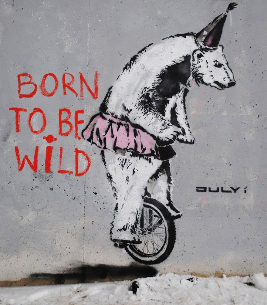 Born to be wild, but I work in circus now
