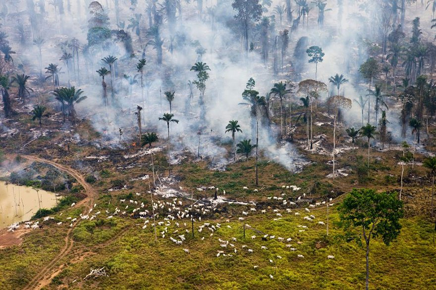 Burnt down a jungle to use the place (Amazon - Brazil) Overpopulation