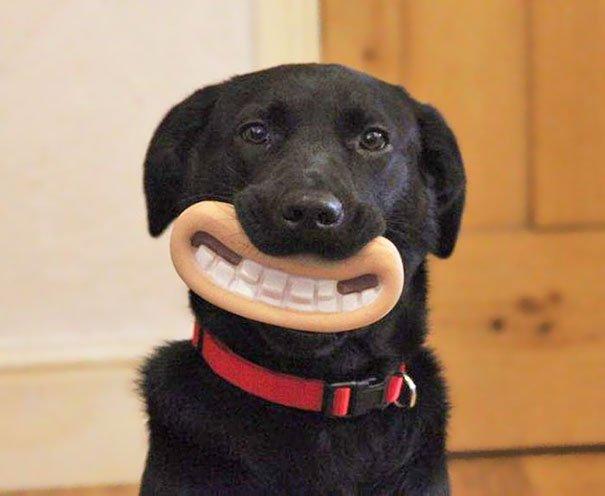 Chew Toy Dog's Toys