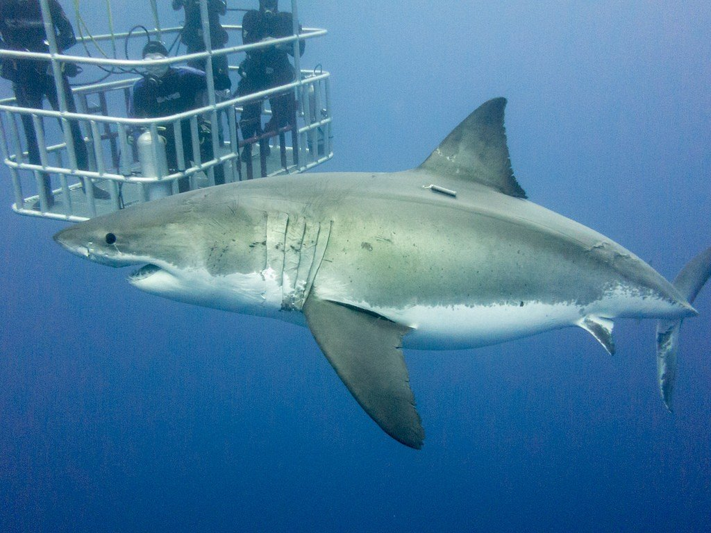 Dive with the White sharks, South Africa Adventure travel ideas
