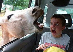 Donkey attacks Perfectly Timed Photos