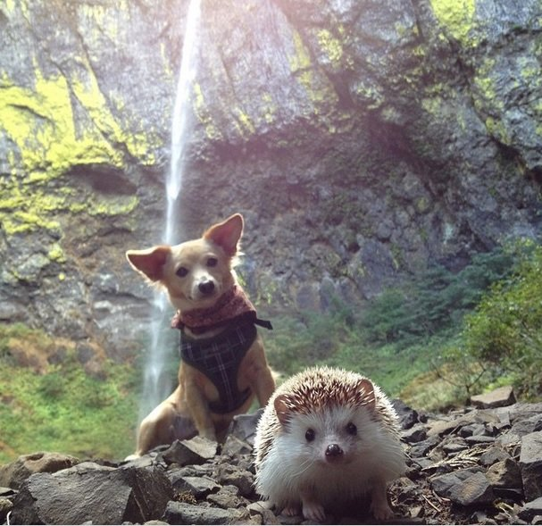 Enjoying the holiday with a friend Hedgehog