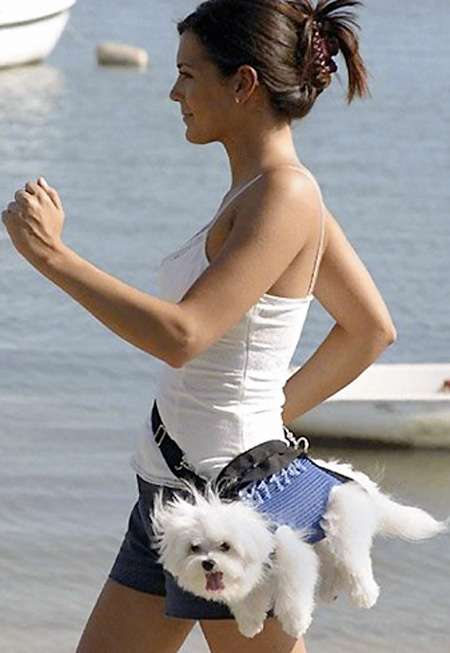 Fanny Pack for Dog Cool Invention