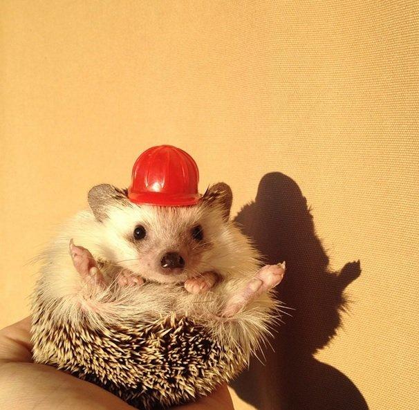 Fireman Hedgehog